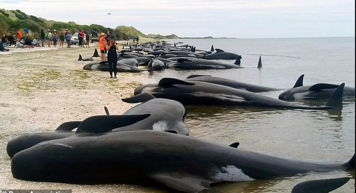 beached whales.png.png
