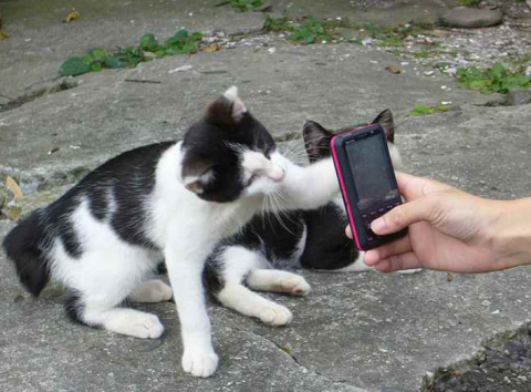 cat phone.png.png