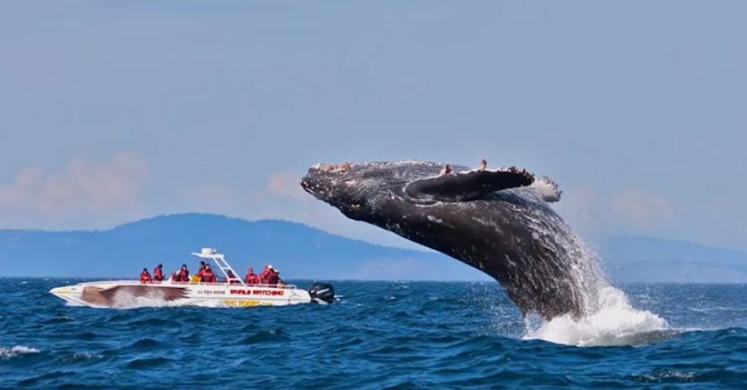 whale watching.png.png