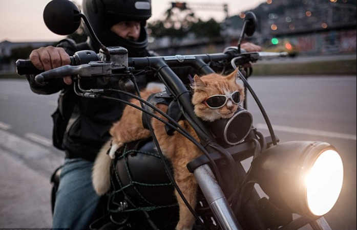 motorcycle cat.png.png