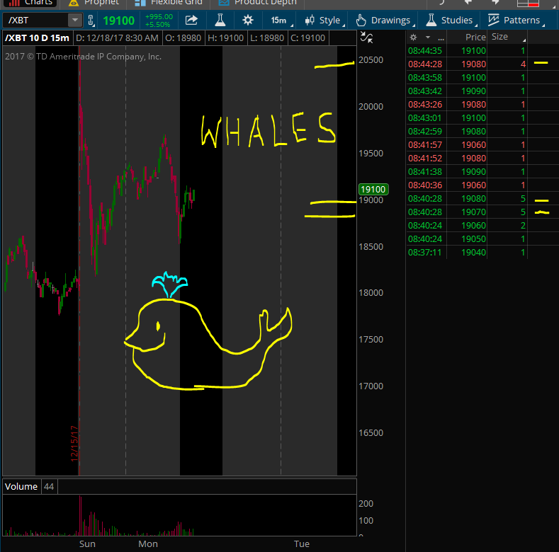 XBT Whales.PNG