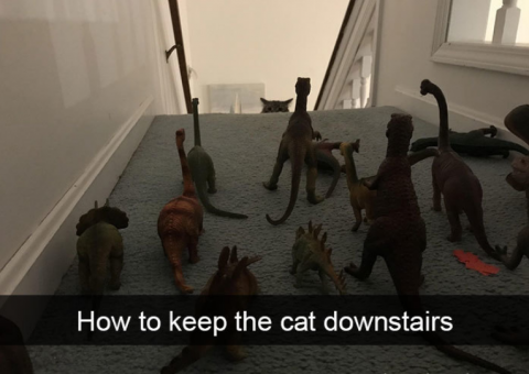 cats downstairs.png.png